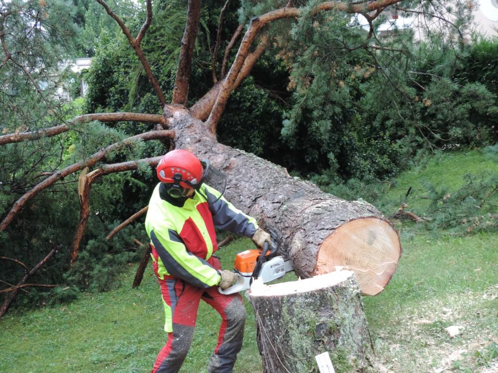 abattage arbre geneve
